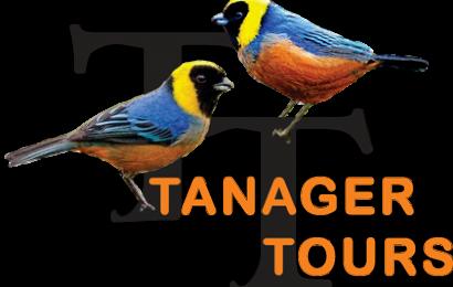 Tanager Tours