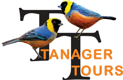 Tanager Tours
