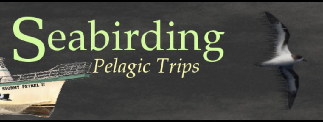 Seabirding