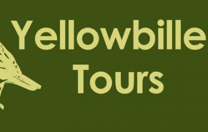 Yellowbilled Tours