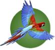 Birding Peru Gateway