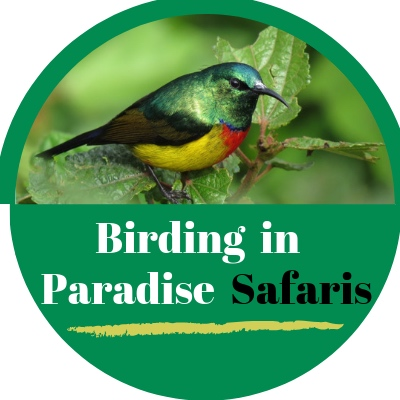 Birding in Paradise Safaris