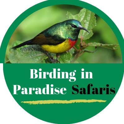 Birding in Paradise Safaris