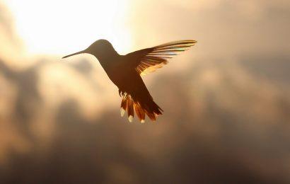 Reflections on the year's last hummingbird