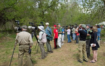 How birdwatching changed in the 2010s
