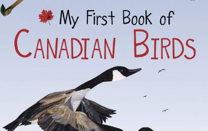 New bird books for children