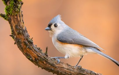 Show your love of birds during the Great Backyard Bird Count