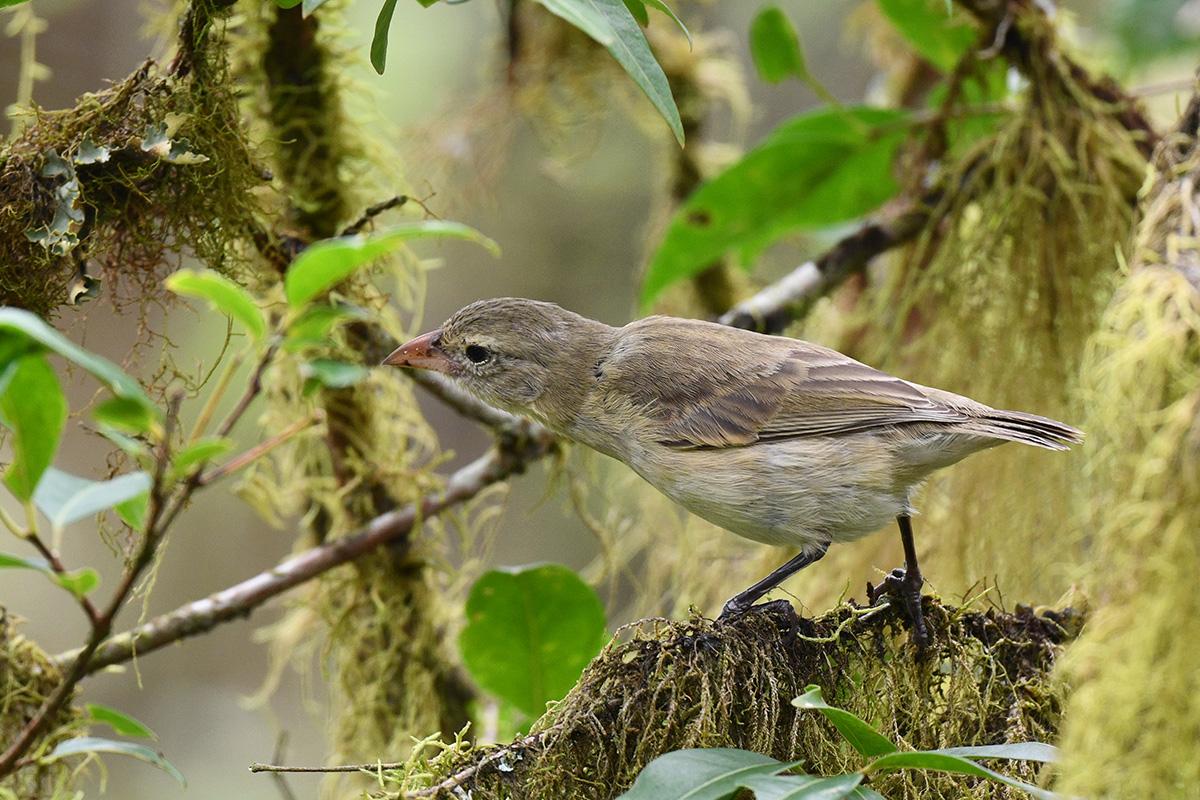 Various ways that birds around the world use tools - BirdWatching
