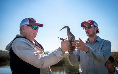 Researchers establish network to monitor birds of the Gulf of Mexico