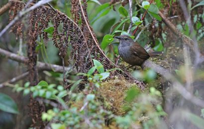 Researchers discover 10 new bird taxa in little-explored Asian islands