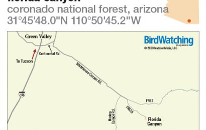 301. Florida Canyon, Coronado National Forest, Arizona