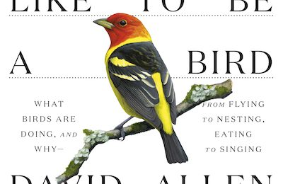 New Sibley book explores birds' experiences
