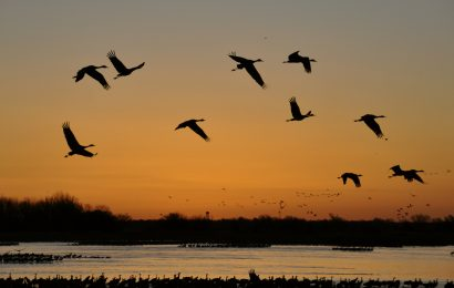 Birding festivals and events canceled due to COVID-19 outbreak