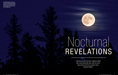 Nocturnal revelations
