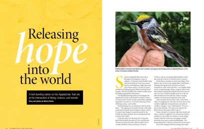 Releasing hope into the world