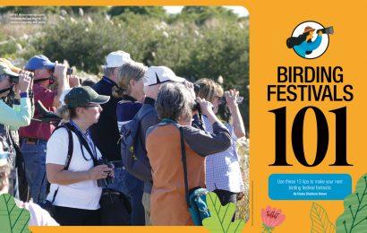 Birding festivals 101