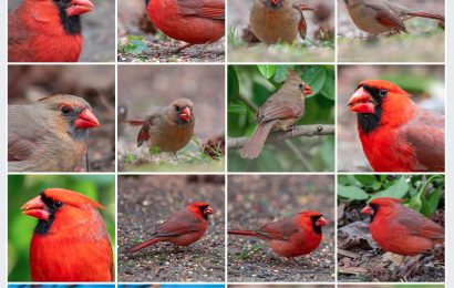 New Jersey photographer posts cardinal photos for COVID-19 victims