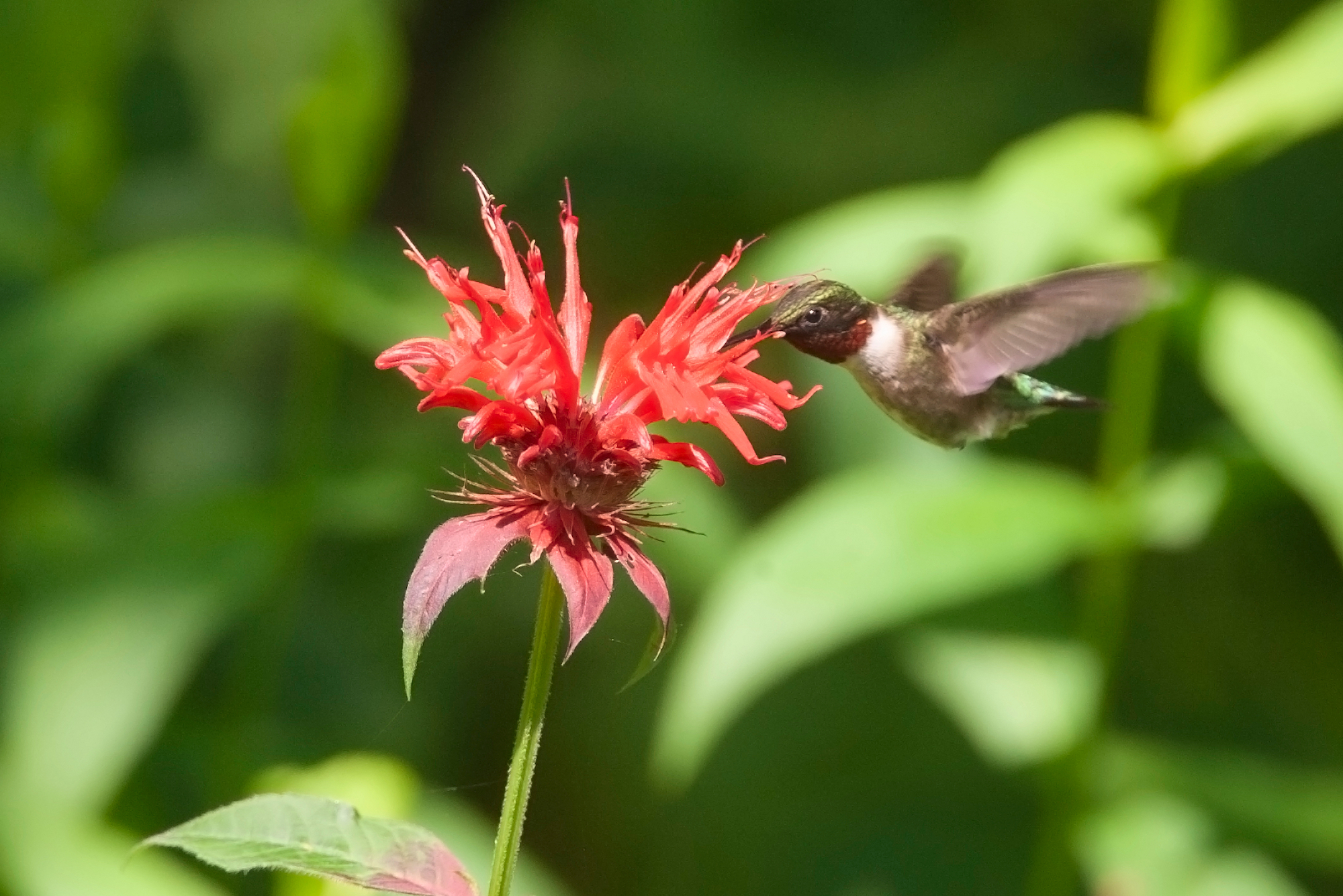 native-plant gardening