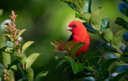Understanding birds' habitat can help you identify them