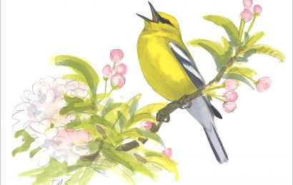 Golden Gate Audubon holds online bird art auction