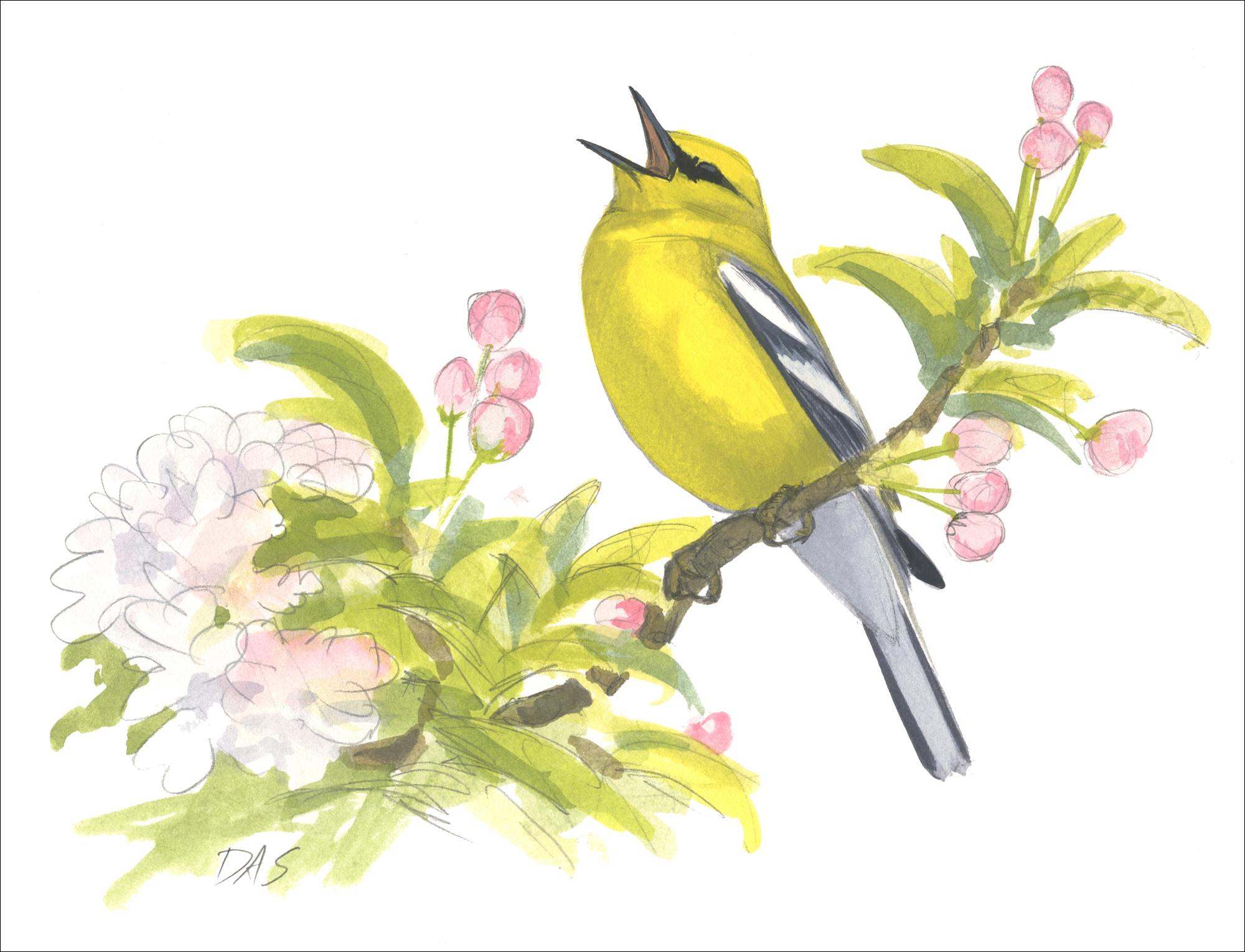 bird art contest