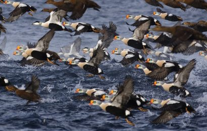 Photos by David Tipling of amazing migratory birds