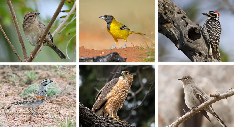 rename birds