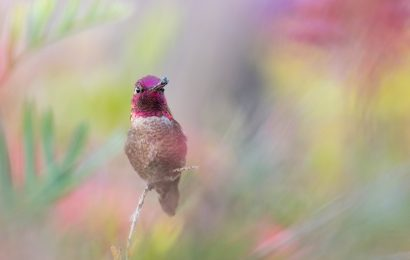 2020 BirdWatching Photography Awards Contest honorable mentions