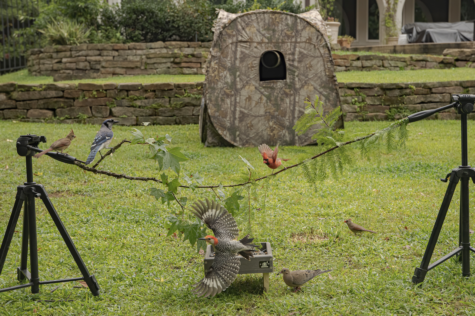 backyard bird photo studio