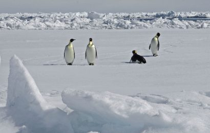 Satellite study finds new Emperor Penguin colonies in Antarctica