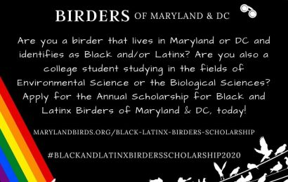 Maryland and D.C. groups create scholarship for Black and Latinx birders