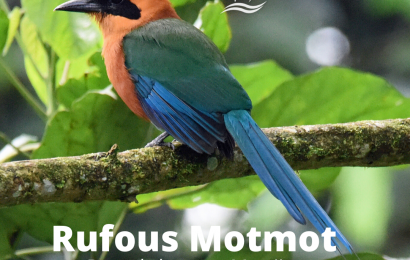 Free virtual Panama birding tour for BirdWatching readers