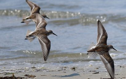 Cornell Lab of Ornithology hosts online events about migration