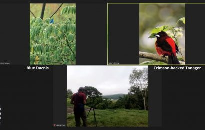 Go birding by Zoom on Panama's Pipeline Road