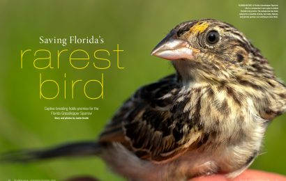 Saving Florida's Rarest Bird