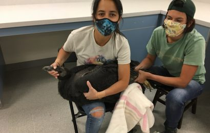 Oregon Zoo relocates 44 condors due to fire threat