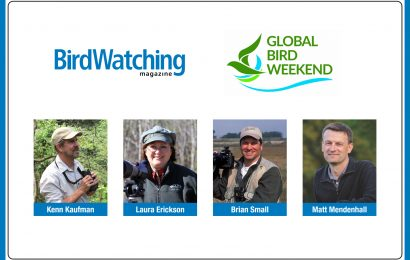 Get ready for October Big Day and Global Bird Weekend