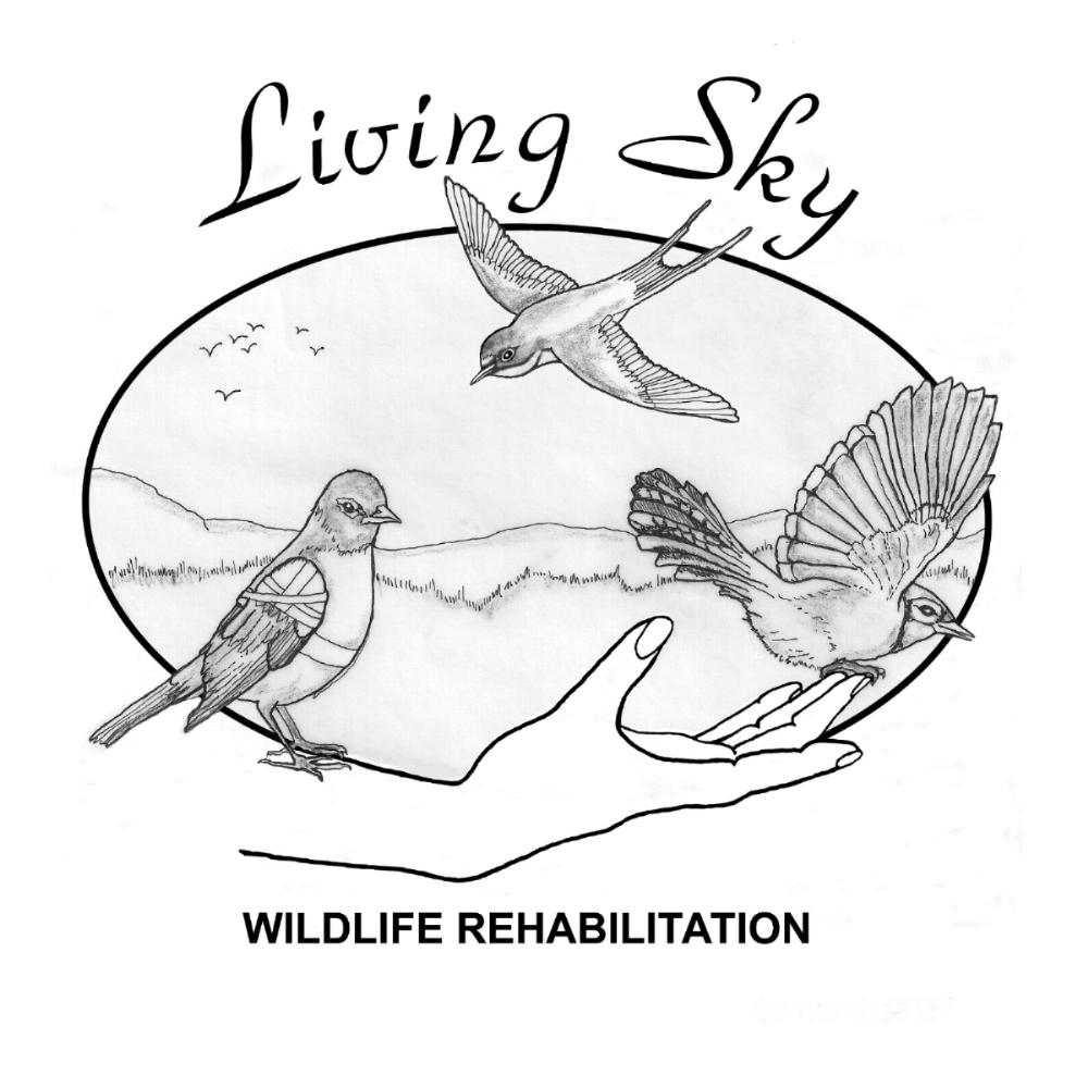 Saskatoon Custom Bird Tours with Living Sky Wildlife Rehabilitation