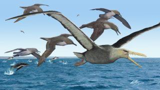 giant seabirds
