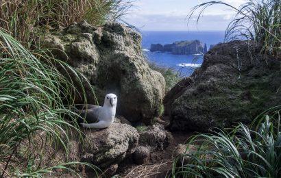 Tiny Tristan da Cunha protects vast ocean area