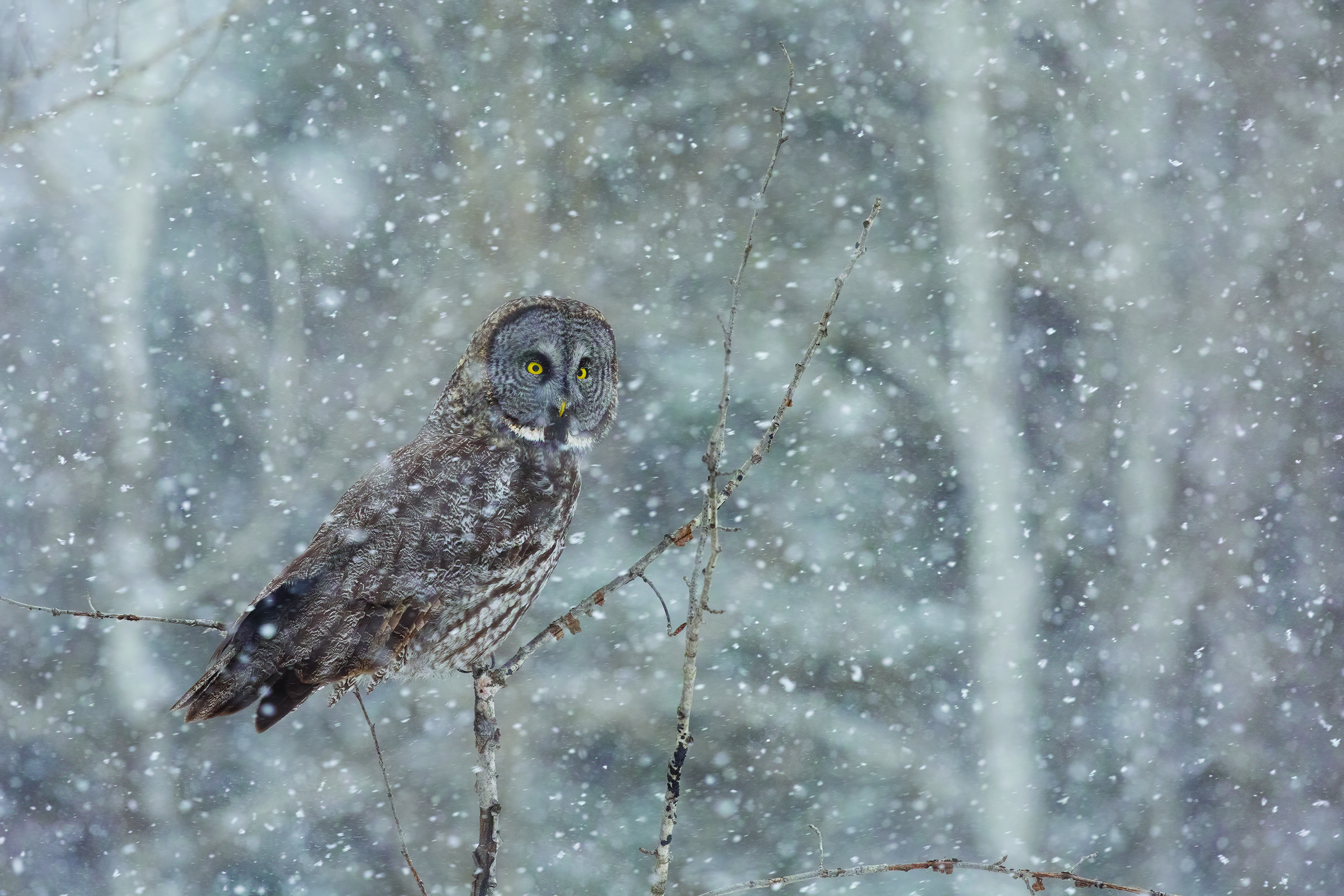 Winter bird photography