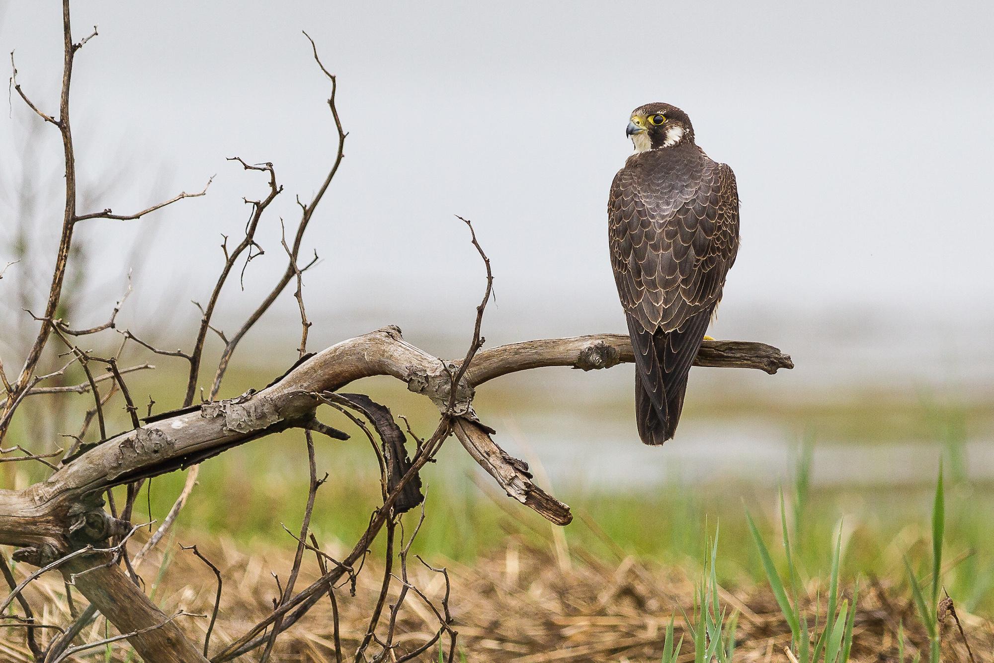 bird-killing rule