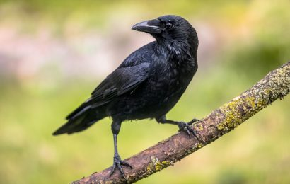 Studies suggest some birds exhibit consciousness