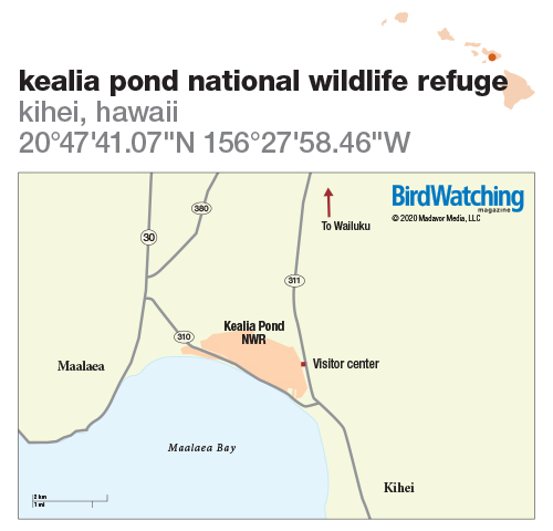309. Kealia Pond National Wildlife Refuge, Kihei, Hawaii