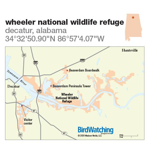 307. Wheeler National Wildlife Refuge, Decatur, Alabama