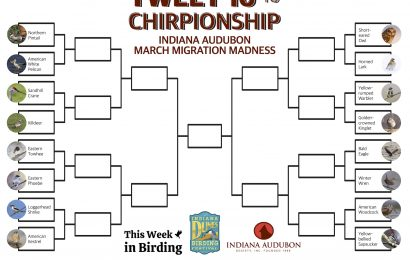March Migration Madness celebrates Indiana's birds