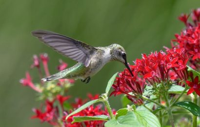 8 top books about bird behavior, habitat, hummingbirds, and more