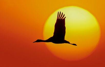 7 spectacular photos of Sandhill Cranes in Nebraska
