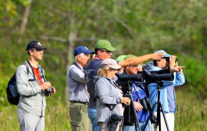 How to get started choosing birding binoculars