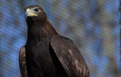 Raptor rehab centers in the U.S. and Canada